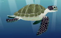 <font color=gray>Turtle -  See for yourself Water - Dorling Kidersley </font>