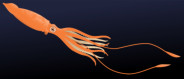 <font color=gray>Giant Squid - DK See for yourself - Water </font>